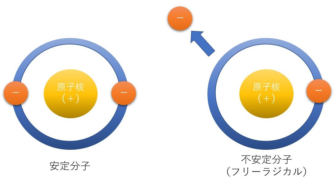 活性酸素とフリーラジカル